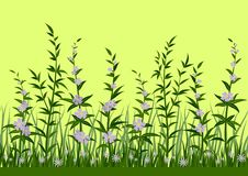 Grass and Flowers, Seamless Stock Photo