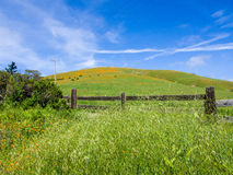 Grass, Flowers and Sky. Green grass, wooden fence, field of golden poppies. California Royalty Free Stock Images