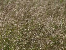 Grass flowers, South Bohemia. Czech Republic Royalty Free Stock Images