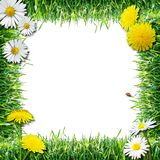 Grass and flowers. Spring and summer natural frame, white background royalty free stock photography