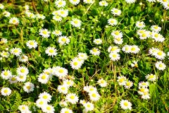The grass with flowers on spring time Stock Photo