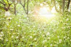 Grass flowers and sun light Stock Photo