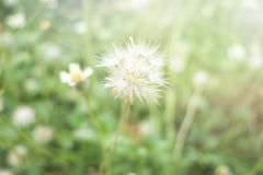 Grass flowers and sun light Royalty Free Stock Photo