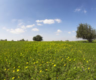 The grass, flowers and trees Stock Photography
