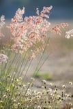Grass flowers under the sunlight Stock Photos