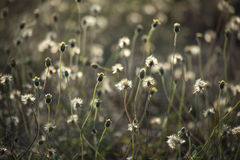 Grass flowers under the sunlight Royalty Free Stock Photos