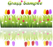 Grass with flowers Royalty Free Stock Photo