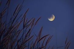 Grass flowers and waning moon in blue sky Stock Photos