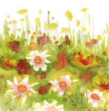 Grass and flowers. Watercolor hand-drawn illustrator with grass and flowers Stock Photo