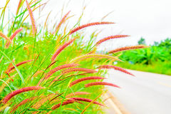 Grass flowers wayside. In the sky background Royalty Free Stock Image