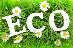 Grass with flowers and white text ECO Stock Photo