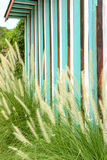 Grass flowers with wood wall Stock Image
