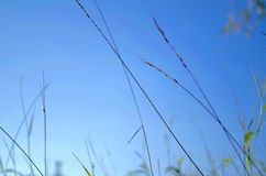 Grass. Fly in the summer wind is very Stock Photos