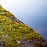 Grass foam stock photo