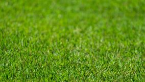 Grass in focus. Royalty Free Stock Image