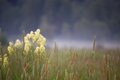 Grass and fog. Big field, mist and green grass Stock Photos
