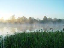 Grass&Fog Foto de Stock Royalty Free
