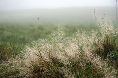 Grass in fog Stock Photo