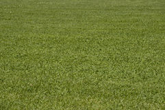 Grass of the football field Royalty Free Stock Image