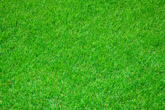 Grass on football stadium Royalty Free Stock Photo