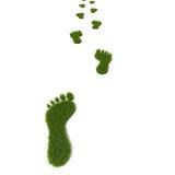 Grass footprint Stock Images