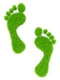 Grass footprints Stock Photography