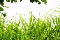 Grass in forest Stock Photo
