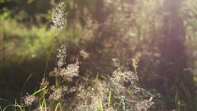 Grass in  forest stock video footage