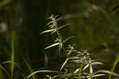 Grass in the forest, summer landscape stock image