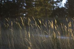 Grass in the forest at sunset day. Illustration of emptiness and reflection.  stock photography