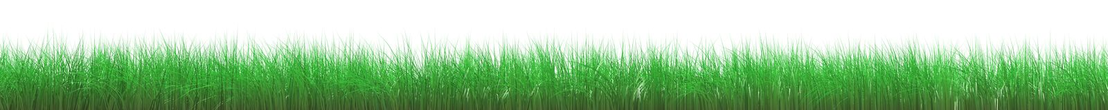 Grass frame. Green grass hairs background white ball turf frame nature object plant season space spring springtime summer summertime Royalty Free Stock Photography