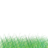 Grass of frame. On white background Stock Photo