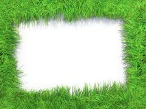 Grass frame. Green grass frame with withe backgound Stock Images