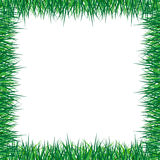 Grass frame. The frame made of the grass Royalty Free Stock Photos