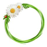 Grass frame with daisy flowers and ladybug . Stock Photo