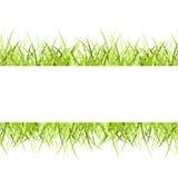 Grass frame Royalty Free Stock Photo