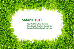 Grass frame isolated. On white background royalty free stock images