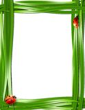 Grass frame with ladybugs. Stock Photos