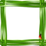 Grass frame with ladybugs. Vector illustration Royalty Free Stock Image