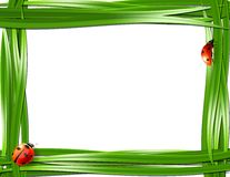 Grass frame with ladybugs. Royalty Free Stock Images