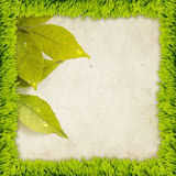 Grass frame with leaves Stock Images