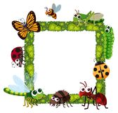 Grass frame with many insects Royalty Free Stock Photography