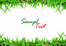 Grass Frame On White Background Stock Photography