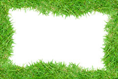Grass frame picture Stock Image