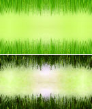 Grass frame Royalty Free Stock Image