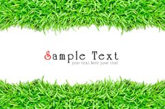Grass frame in white background Stock Images