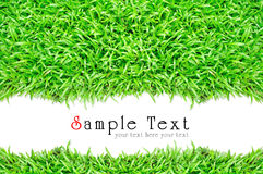 Grass frame in white background Stock Photos