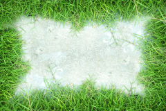 Grass frame white background Royalty Free Stock Images