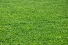 Grass. Fresh, green grass. Spring time Royalty Free Stock Image