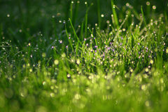 The grass. Fresh grass after a rain, morning dew Stock Photo